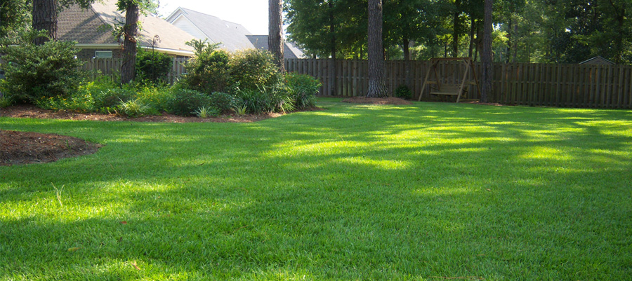 Lawn Services Lawn Maintenance Trugreen
